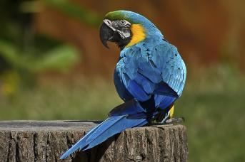 Papagei-ei-ei