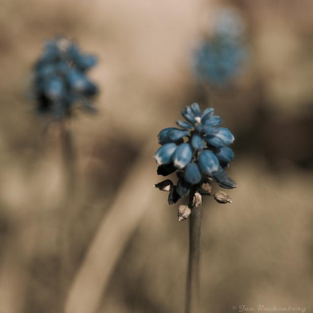 Variationen: Blumen aus dem Lightroom