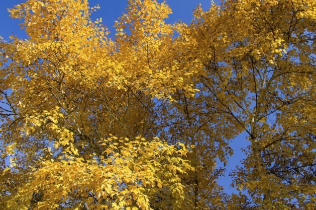 blau-gelber Herbsthimmel