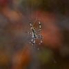 Pfui Spinne oder Hui Spinne