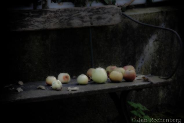 Dreaming Herbst Apple