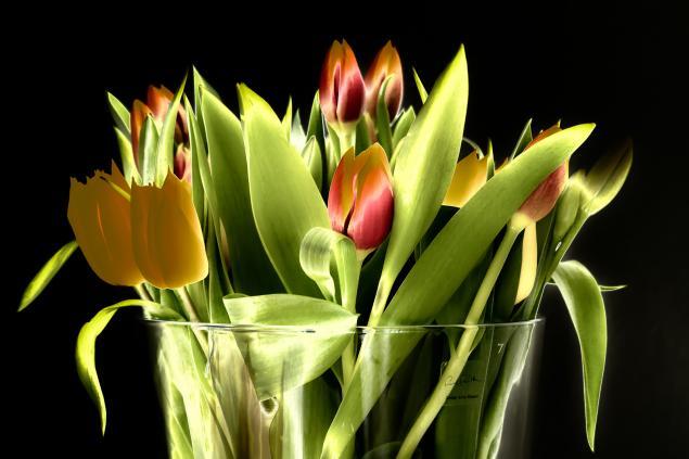 Tulpen - gebraten und solarisiert