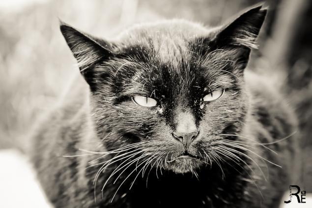 Böse Mietze-Katze
