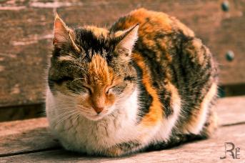 Dösige Mietze-Katze