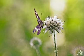 Ein Schmetterling im späten Nachmittagslicht