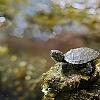 Mini Schildkröte