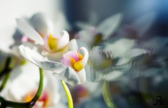 26IDreizehn: 06 - Frühling