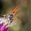 Schmetterling(e) #1