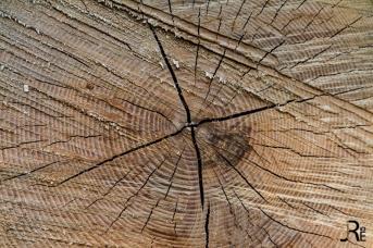26IDreizehn: 17 - Holz