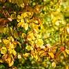 26IDreizehn: 21 - Herbst