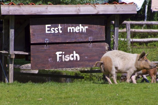 Esst mehr Fisch !!!! Schweinisches Motto